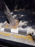tree on footpath cement ground tiles stock photo