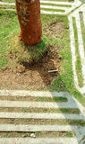 Tree on footpath Royalty Free Stock Images