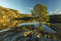 Tree in the foreground of a lake in Bergen, Norway Stock Photography