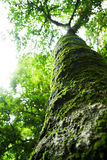 Tree. In forest Stock Image