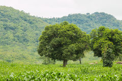 tree in forest Stock Photography