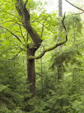 Tree In Forest. Photo was taken in Poland and shows beautiful old tree Stock Photo