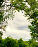 Tree forest Royalty Free Stock Images