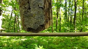 Tree in the forest grows from the sky. the wonders of nature.  Stock Photography