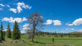 Tree in Forest Meadow Royalty Free Stock Photography