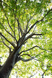 Tree in the forest, nature green wood, sunlight backgrounds. Stock Photography