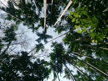 Tree forest nature rainforest royalty free stock images