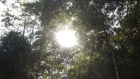 Tree in forest with sunlight.  stock footage