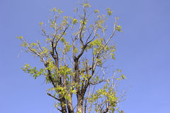 Tree. Forest is Terr in thailand provide nakhonnayork Royalty Free Stock Photos