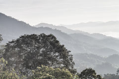 Tree with Forest. A tree vs layers of thick forest mountains Stock Photos
