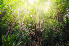 Tree in the forest with a warm light Stock Image