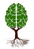 A tree in the form of a human brain. Two hemispheres. Green plant for an article on knowledge and teaching. Stock Photo