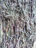 tree& x27; fotografia de s Fotografia de Stock Royalty Free