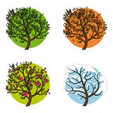 A tree in four different seasons. Set of four trees in different seasons, vector illustration Stock Photos
