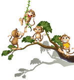 A tree with four monkeys Royalty Free Stock Images