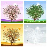 Tree in the four season Royalty Free Stock Image
