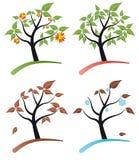 Tree four seasons Stock Photography