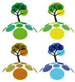 Tree four seasons Royalty Free Stock Photo