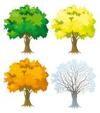 Tree at four seasons. Vector Trees with green, yellow and orange leaves. Tree without leaves at winter Stock Image