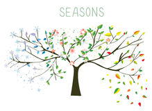 Tree during four seasons concept Royalty Free Stock Images