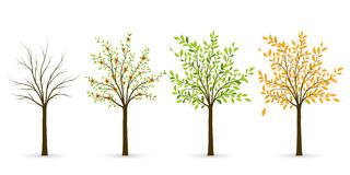 Tree in four seasons - winter, spring, summer, autumn. Vector il Royalty Free Stock Photo