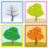 Tree Four Seasons Year Change Royalty Free Stock Photos