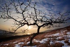 Tree från Ryssland 2 Royaltyfria Foton