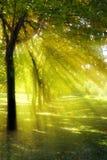tree för ljusa strålar Arkivfoto