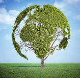 Tree för världsöversikt Arkivfoto
