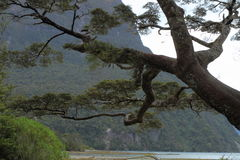 Tree fragment Stock Image