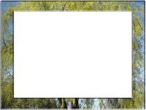 Tree frame stock photo