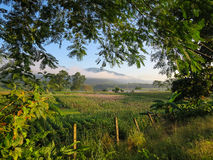 Tree frame foreground showing morning scene of crop field, river Stock Images