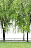 Tree frame. Grass field and trees on  white background Stock Photos
