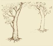 Tree frame. Vector illustration. Shadow of two old oaks on wide glade field isolated on white backdrop. Freehand line black ink hand drawn picture sketchy in art Stock Photography
