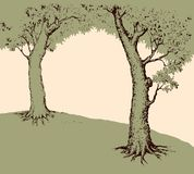 Tree frame. Vector illustration. Shadow of two old oaks on wide glade field isolated on white backdrop. Freehand line black ink hand drawn picture sketchy in art Stock Images