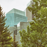 Tree Framed Buildings Royalty Free Stock Photos