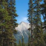 Tree Framed Mountain Royalty Free Stock Photo