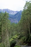 Tree framed mountains. Trees frame a mountain scene in Telluride, Colorado.  A couple hikes on the shady trail in the foreground Royalty Free Stock Photography
