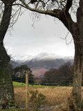 Tree Framed Mountains Stock Images