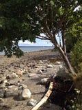 Tree framed ocean view Stock Image