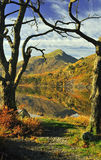 Tree framed view, Snowdonia national park. Taken from the shore of Llyn Gynant in winter, and framed by Alder trees, the mountain Moel Hebog, reflected in the royalty free stock photo