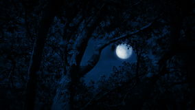 Tree Framing Full Moon In Night Sky. Full moon seen through opening int the forest stock video