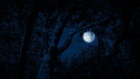 Tree Framing Full Moon In Night Sky stock video