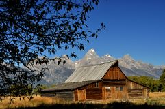 Tree framing an old barn with snow capped mountain Stock Images