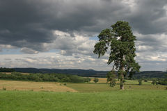 Tree in France. Tree standing alone in the field Royalty Free Stock Image