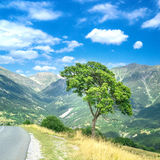 Tree in the French Alpes. Tree nearby road with mountains in the background stock photo
