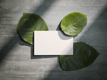 Tree fresh leafs and white busines card. 3d rendering Royalty Free Stock Photos
