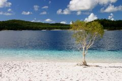 Tree by Fresh Water Lake royalty free stock photography
