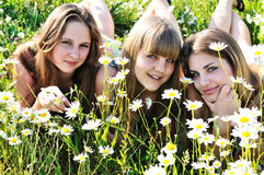 Tree friends Royalty Free Stock Photography