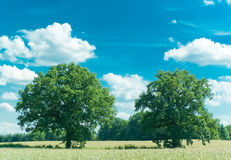 Tree Friends royalty free stock images